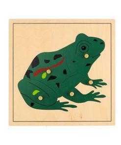 Puzzle Grenouille montessori en bois. Découverte de la grenouille