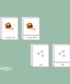 Nomenclature du Cycle De L'escargot