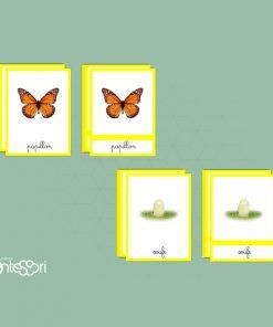 Cartes De Nomenclature Du Cycle Des Papillons