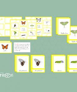 le Cycle Du Papillon
