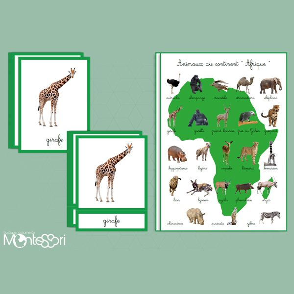 animaux du continent africain