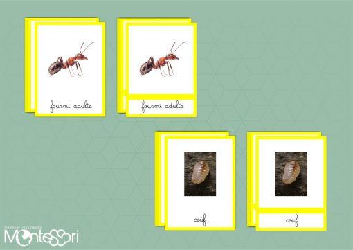 carte de nomenclature de la fourmi
