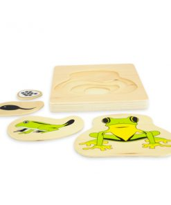 Cycle de la grenouille montessori