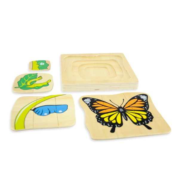 cycle du papillon montessori