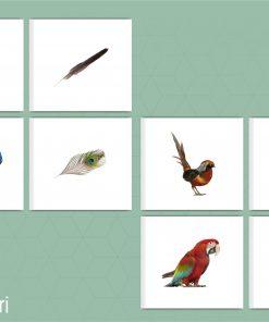 jeu oiseau et plumes