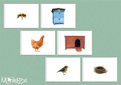 Document montessori