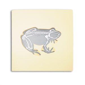grenouille avec squelette montessori