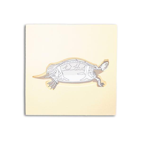 puzzle tortue avec squelette