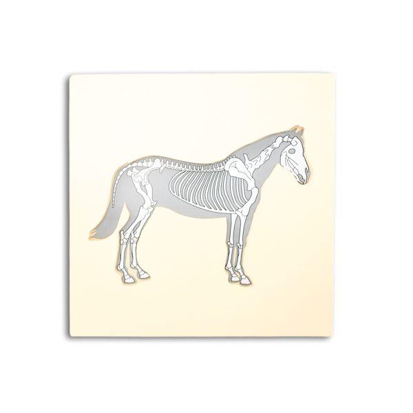 cheval montessori