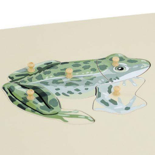 grenouille montessori