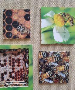 puzzle montessori cycle de l'abeille