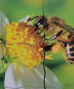 puzzle cycle de l'abeille