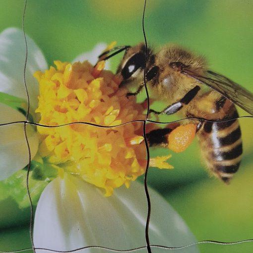 puzzle cycle de l'abeille