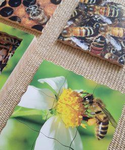 cycle de l'abeille puzzle montessori