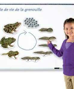 cycles de vie magnétiques grenouille