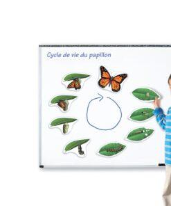 cycles de vie magnétiques papillon